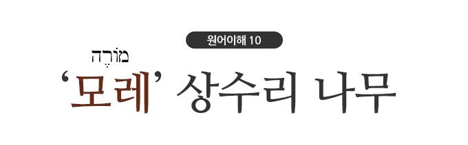 title_모레상수리나무.jpg